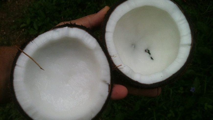 Die Flüssigkeit in der Kokosnuss