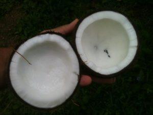 weißes Palmöl der Kokosnuss