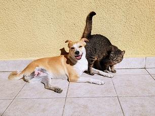 kokosoel hund und katze